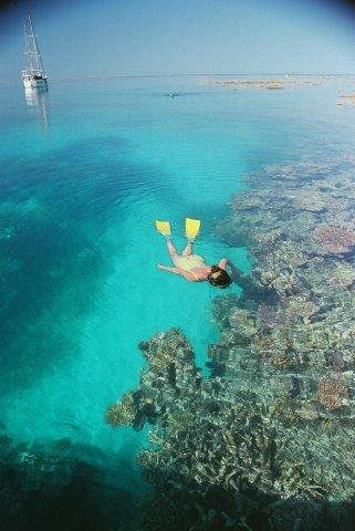 luxury boat charter whitsundays snorkeller in Bait Reef